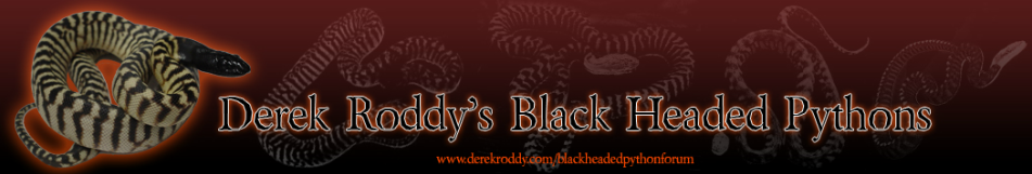 Derek Roddys Black Headed Pythons